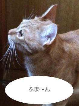 ファイル_004.jpeg