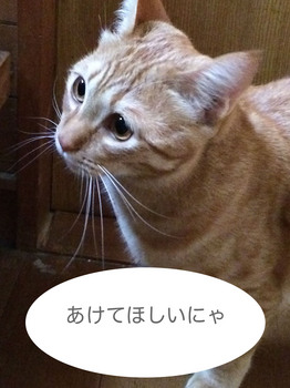 ファイル_005.jpeg
