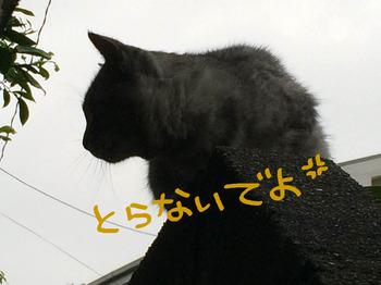 IMG_113.jpg