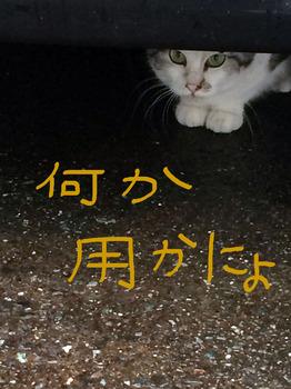 IMG_114.jpg